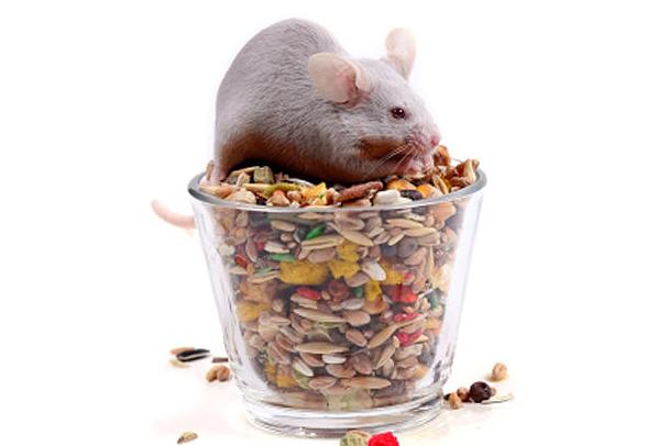 най-безумни медицински практики с мишки, статия от печати за лекари Модико България